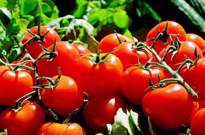 Pěstování rajčat v zimě